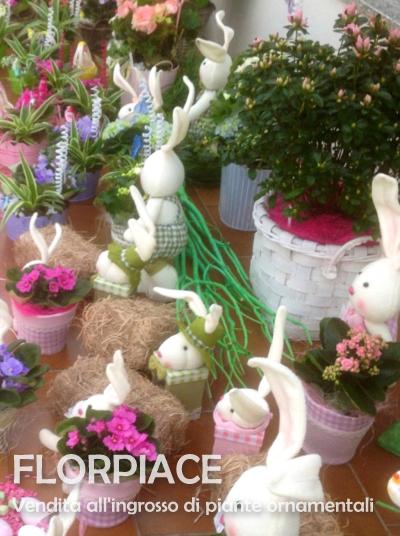 Florpiace s s societ agricola vendita all 39 ingrosso for Vendita piante ornamentali