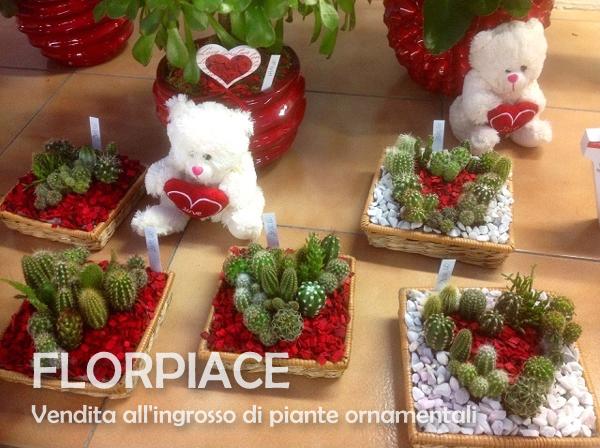 Florpiace s s societ agricola vendita all 39 ingrosso for Composizione di piante grasse in grande vaso